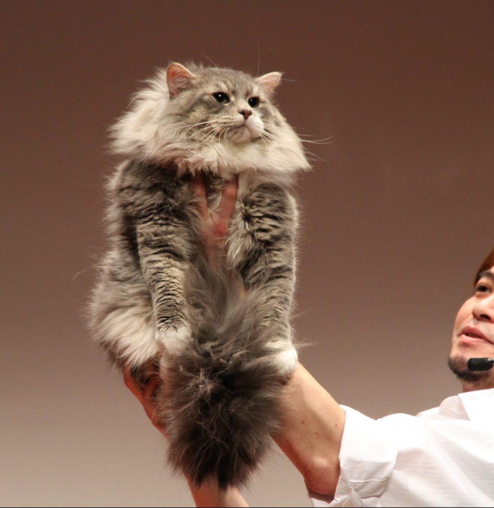名猫ショー